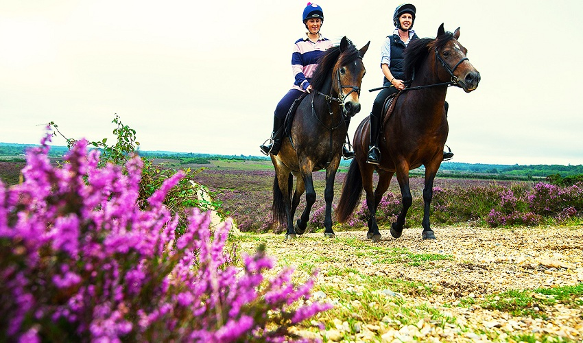 Outdoor Activities: Top 4 Locations for Horse Riding in the UK